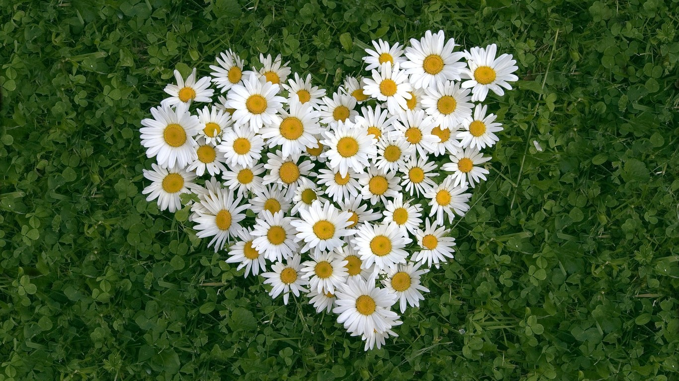 chamomile-heart-flowers-ppt-backgrounds-powerpoint